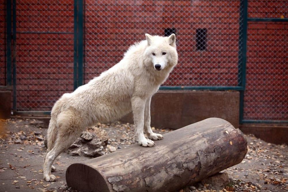 zooloski vrt FOTO MASANORI JOSIDA