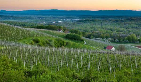 vina slovenije zidanice