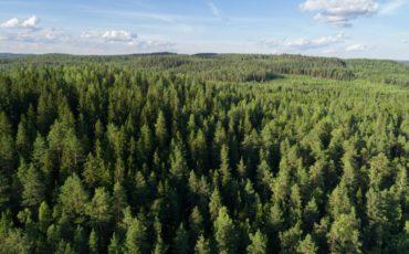 VTT Forest Twin